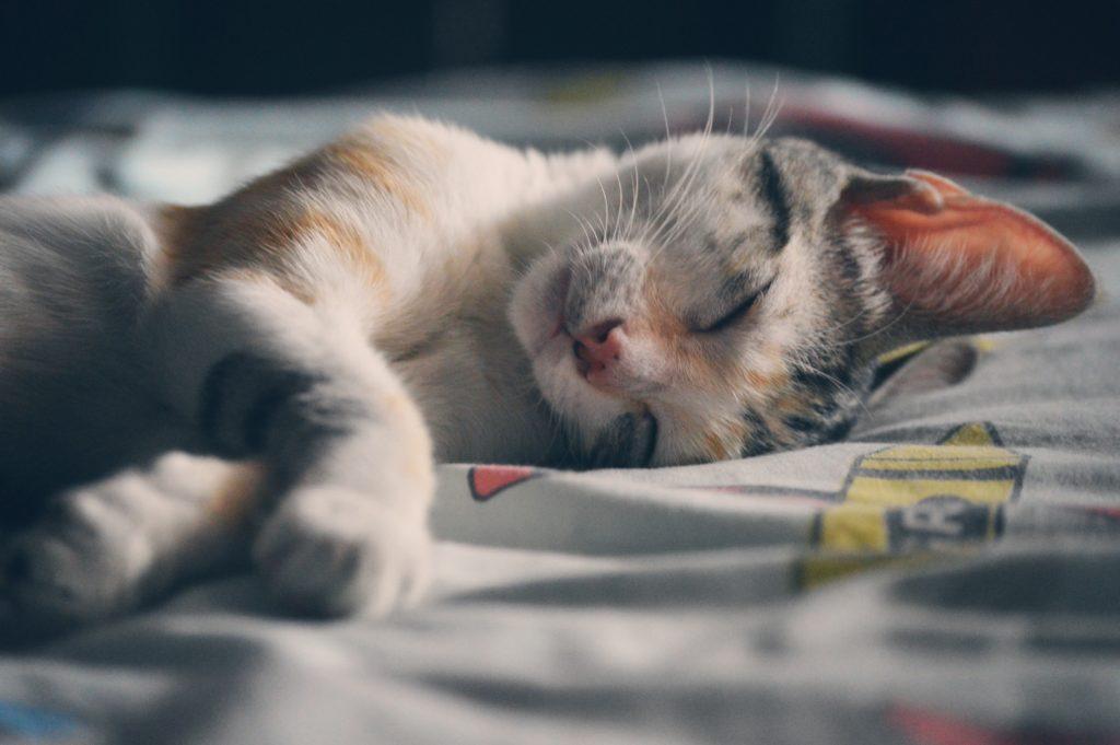 Petit chat mignon qui fait dodo dans une maison rangée